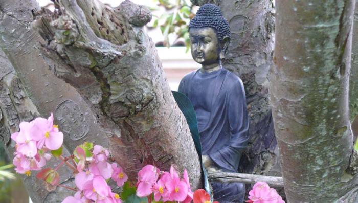 garden_buddalong